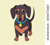 Cute Domestic Dog Dachshund...