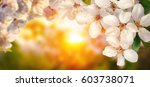 beautiful cherry blossoms at... | Shutterstock . vector #603738071