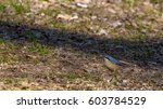 The Eurasian Nuthatch Or Wood...
