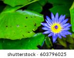 purple tropical lotus waterlily ... | Shutterstock . vector #603796025