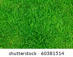 close up image of fresh spring... | Shutterstock . vector #60381514