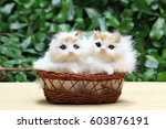 The Two Cats Or Kittens In The...