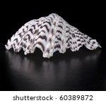 seashell on semi glossy black... | Shutterstock . vector #60389872