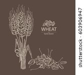 background with wheat  grain...   Shutterstock .eps vector #603906947