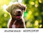 Stock photo adorable labrador puppy dog portrait with light bokeh abstract background 603923939