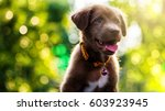 Stock photo brown labrador retriever puppy dog with foliage bokeh sunset light abstract 603923945