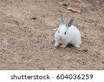 rabbit for easter holiday  ... | Shutterstock . vector #604036259
