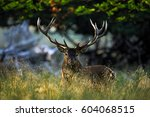 deer  bellow majestic powerful... | Shutterstock . vector #604068515