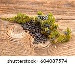 common juniper  juniperus... | Shutterstock . vector #604087574