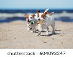 Jack Russell Terrier Dogs...
