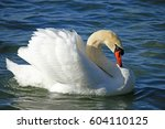 swan at lake geneva switzerland | Shutterstock . vector #604110125