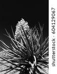 black and white flowering... | Shutterstock . vector #604129067