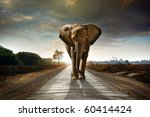 Stock photo single elephant walking in a road with the sun from behind 60414424