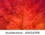 red leaf texture | Shutterstock . vector #60416398