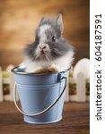 animal easter  baby bunny  egg | Shutterstock . vector #604187591