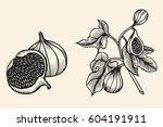 hand drawn sketch fruit set.... | Shutterstock .eps vector #604191911