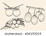 set isolated fruit apricots ... | Shutterstock .eps vector #604192019