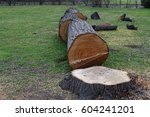 Small photo of Cut trees