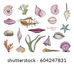 hand drawn seashells collection.... | Shutterstock .eps vector #604247831