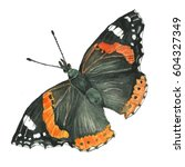 Butterfly Admiral. Watercolor...