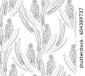 muscari flowers hyacinths... | Shutterstock .eps vector #604389737