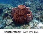 Big Barrel Sponge Coral