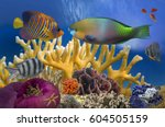 tropical fish on coral reef in... | Shutterstock . vector #604505159