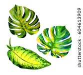 tropical hawaii leaves palm... | Shutterstock . vector #604613909