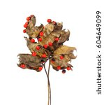 Small photo of Jequirity seeds,Abrus precatorius L. on white background