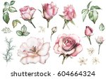 Stock photo set elements of rose collection garden and wild flowers branches illustration isolated on white 604664324