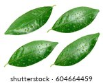 citrus leaves with drops... | Shutterstock . vector #604664459