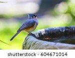 A Titmouse Bird On A Birdbath