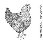 sketch illustration of hen.... | Shutterstock .eps vector #604704401