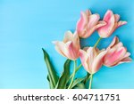 tulips on blue background top... | Shutterstock . vector #604711751