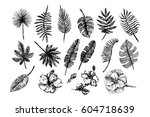 tropical leaves illustration  | Shutterstock .eps vector #604718639
