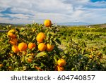 Close Up View Of Oranges On Th...
