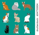 cat breed cute pet portrait... | Shutterstock .eps vector #604753004