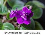 Room Flower Of A Violet...