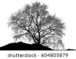 realistic tree silhouette ...   Shutterstock . vector #604805879