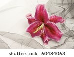 Pink Lily On Background.