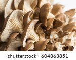 Oyster Mushrooms On White...