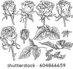 rose flower  | Shutterstock .eps vector #604866659