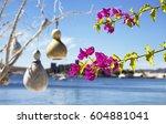 bougainvillea flower. yachts ... | Shutterstock . vector #604881041