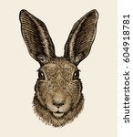 Easter Bunny. Portrait Of Hare...