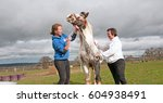Small photo of Routine wormer being administered to a uncooperative horse