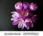 Violet Saffron Flower On Black...