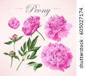 set of peonies   Shutterstock .eps vector #605027174