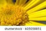 Yellow Flower Macro.