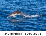 a jumping wild and free striped ... | Shutterstock . vector #605065871
