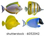 Four Tropical Fishes Isolated...